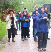 Birders on Schumsky Road looking for Warblers